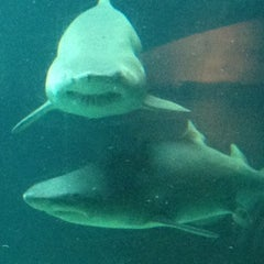 Photo taken at New York Aquarium by Turki A. on 5/30/2012