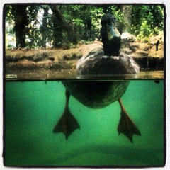 Photo taken at Texas Freshwater Fishery Center by Tui S. on 6/17/2012
