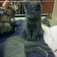 Photo taken at PetSmart by Stevie B. on 6/30/2012