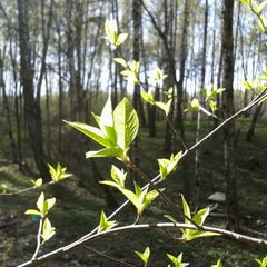 Photo taken at Волшебный Лес by Vlad K. on 4/27/2012