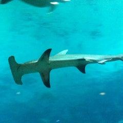 Photo taken at Adventure Aquarium by Erica K. on 8/21/2012