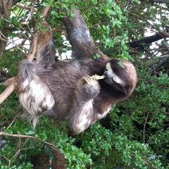 Photo taken at Dallas World Aquarium by Bianca R. on 5/12/2012