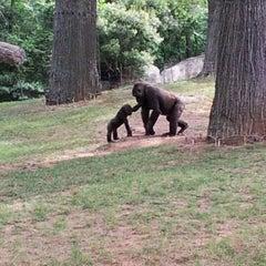 Photo taken at Zoo Atlanta by Crystal T. on 6/9/2012