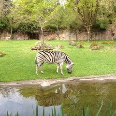 Photo taken at Oregon Zoo by Jeremy M. on 4/29/2012