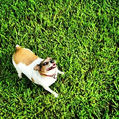 Photo taken at Oakhurst Dog Park by Hector A. on 7/29/2012