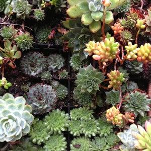 The 11 Best Flower Shops in San Francisco