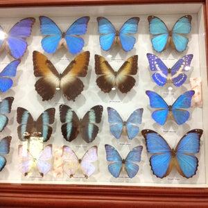 Taman Kupu Kupu (bali Butterfly Park)