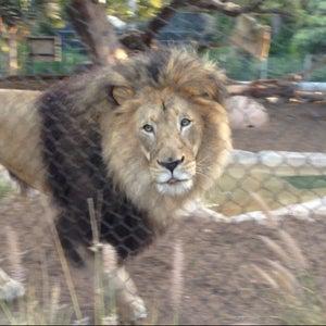 Photo of San Diego Zoo