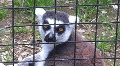 Photo of Zoo Austin Zoo & Animal Sanctuary at 10808 Rawhide Trail, Austin, TX 78736, United States