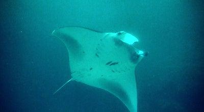 Photo of Dive Spot Manta Point Dive Site at Nusa Penida, Indonesia