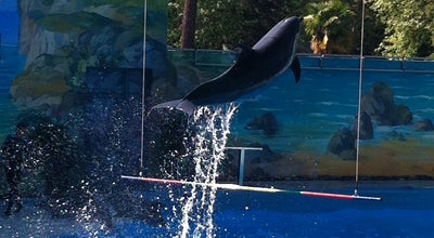 Photo of Aquarium Дельфинарий парка «Ривьера» at Парк «ривьера» / Rivera Park, Сочи 354000, Russia