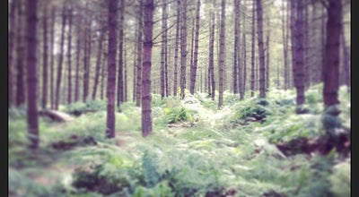 Photo of Trail Cannock Chase at Rugeley, United Kingdom