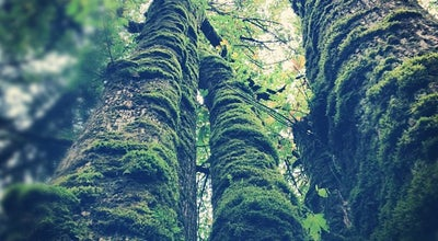 Photo of Trail Forest Park - Thurman Gate at 3800 Nw Thurman St, Portland, OR 97210, United States