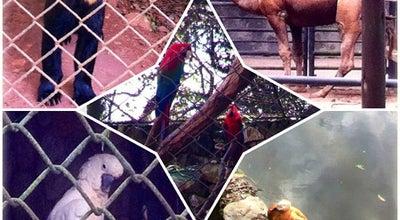 Photo of Zoo Zoo Safari at Av. Do Cursino, 6338, São Paulo 04169-000, Brazil