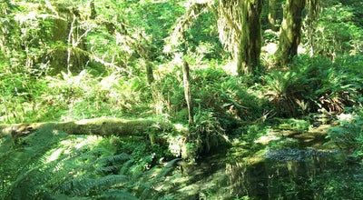 Photo of Trail Hall Of Mosses at WA, United States