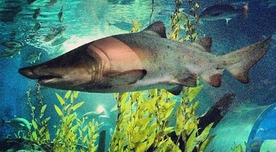 Photo of Aquarium SEA LIFE Bangkok Ocean World (ซีไลฟ์ แบงคอก โอเชี่ยน เวิลด์) at Siam Paragon, Pathum Wan 10330, Thailand