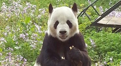 Photo of Zoo 北京动物园 Beijing Zoo at 137 Xizhimen Outer Ave, Beijing, Be, China