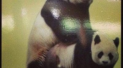 Photo of Arts and Entertainment Panda Centre @Chimelong Safari Park at China