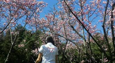 Photo of Garden Japanese Gardens at Chisolm Rd., Auburn, NS 2144, Australia