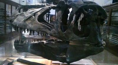 Photo of Science Museum Museo Geologico Giovanni Capellini at Via Zamboni 63, Bologna 40126, Italy