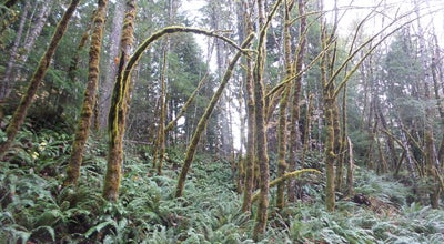 Photo of Park Gifford Pinchot National Forest at 10420 Ne 51st Cir, Vancouver, WA 98682, United States