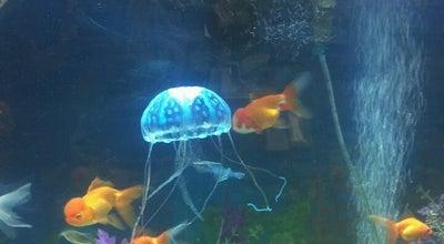 Photo of Pet Store Brooklyn Zoo & Aquarium at 2377 Ralph Ave, Brooklyn, NY 11234, United States