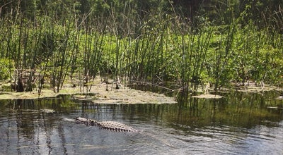 Photo of Lake Wakulla River at Woodville, Tallahassee, FL 32305, United States