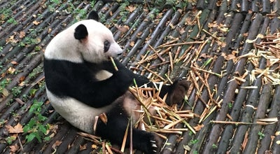 Photo of Zoo Chengdu Research Base Of Giant Panda Breeding at Chengdu,China, China