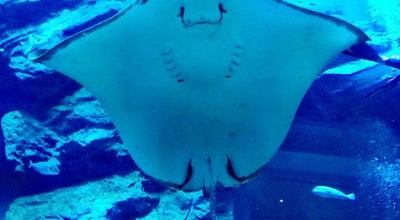 Photo of Aquarium Dubai Aquarium at The Dubai Mall, Dubai, United Arab Emirates