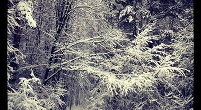 Photo of Park Чоботовский лес at Чоботовская Ул., Москва, Russia