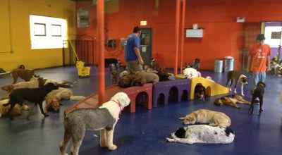 Photo of Pet Service Urban Pooch Canine Life Center at 4501 N Ravenswood Ave, Chicago, IL 60640, United States