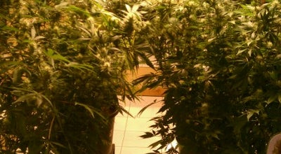 Photo of Museum Hash Marihuana & Hemp Museum at Oudezijds Achterburgwal 148, Amsterdam 1012 DV, Netherlands