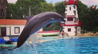 Photo of Theme Park Baía dos Golfinhos at Jardim Zoológico De Lisboa, Lisboa, Portugal
