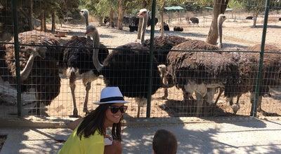 Photo of Park Rhodes Ostrich Farm at Petaloudes, Rhodes 851 06, Greece
