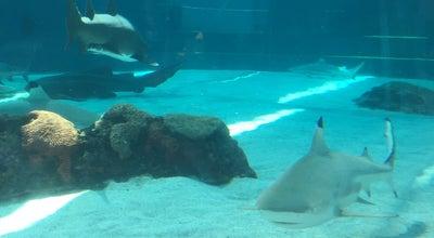 Photo of Aquarium Shark Lagoon at 100 Aquarium Way, Long Beach, CA 90802, United States