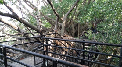 Photo of Monument / Landmark 安平樹屋 Anping Treehouse at 安北路194號, 安平區 708, Taiwan