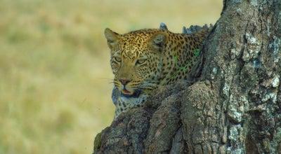 Photo of National Park Serengeti National Park at Tanzania