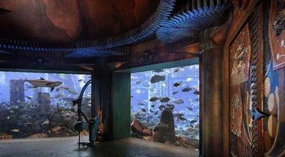 Photo of Aquarium The Lost Chambers Aquarium at Atlantis The Palm, Dubai 211222, United Arab Emirates