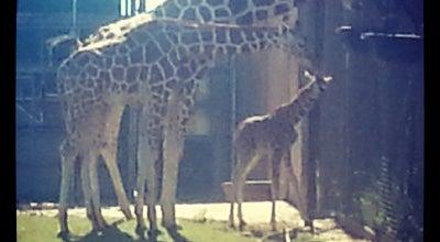 Photo of Arts and Entertainment Giraffe Habitat at 2000 Remington Pl, Oklahoma City, OK 73111, United States
