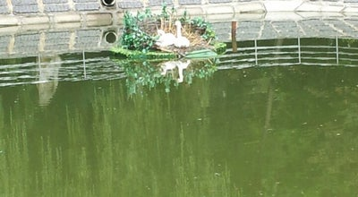 Photo of Lake Озеро с лебедями at Vinnytsya, Ukraine