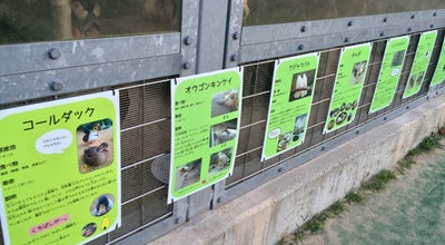 Photo of Park 真教寺公園(動物公園) at 戎町, 鳥取市 680-0055, Japan