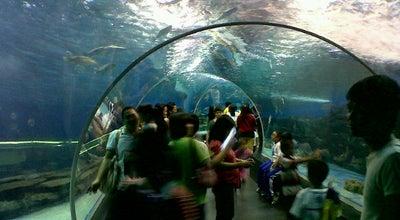 Photo of Aquarium Manila Ocean Park at Roxas Blvd, Manila, Philippines