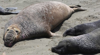 Photo of Scenic Lookout Elephant Seal Overlook at Ca, United States
