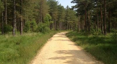 Photo of Forest Moors Valley Park at Ashley Heath, Ringwood BH24 2ET, United Kingdom