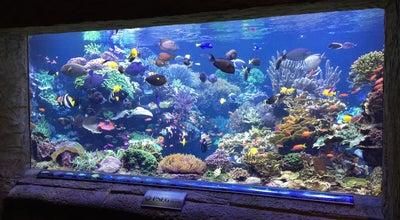 Photo of Aquarium Long Island Aquarium at 431 E Main St, Riverhead, NY 11901, United States