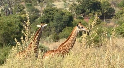 Photo of Trail Groenkloof Nature Reserve at Fountains Rd., Pretoria 0181, South Africa