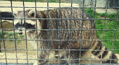 Photo of Zoo Budakeszi Vadaspark at Budakeszi 2092, Hungary