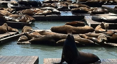 Photo of Scenic Lookout Sea Lions at Pier 39 at 39 Marina Blvd, San Francisco, CA 94111, United States