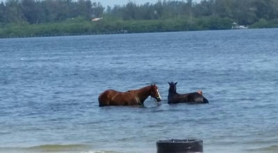 Photo of Beach Beach Horses At Bradenton Beach at Bradenton, FL 34209, United States