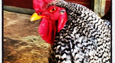 Photo of Animal Shelter The Gentle Barn at 15825 Sierra Hwy, Santa Clarita, CA 91390, United States